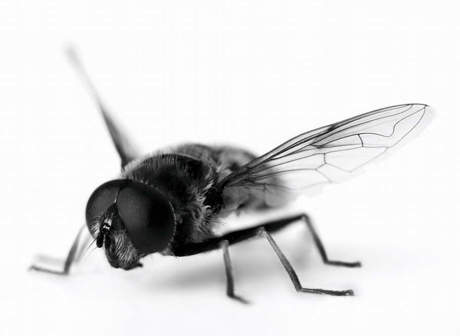 nudging foredrag: Fluen i toilettet. Få inspiration og teori, der gør dig i stand til at flytte mennesker.